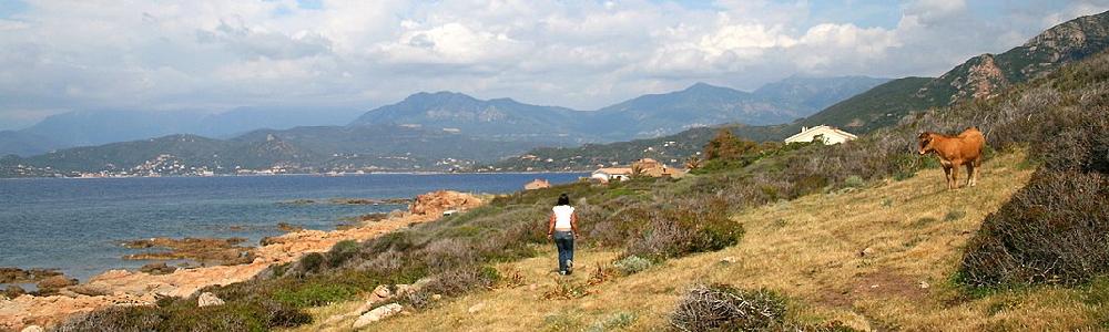 Unterkünfte in Calcatoggio Westküste