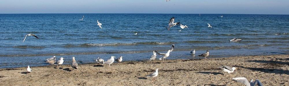 Möwen am Strand von Boltenhagen
